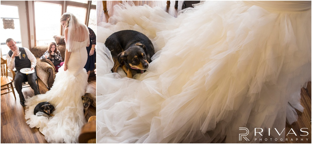 Lake of the Ozarks Elopement | Two pictures of a bride's dog napping on the train of her wedding gown.
