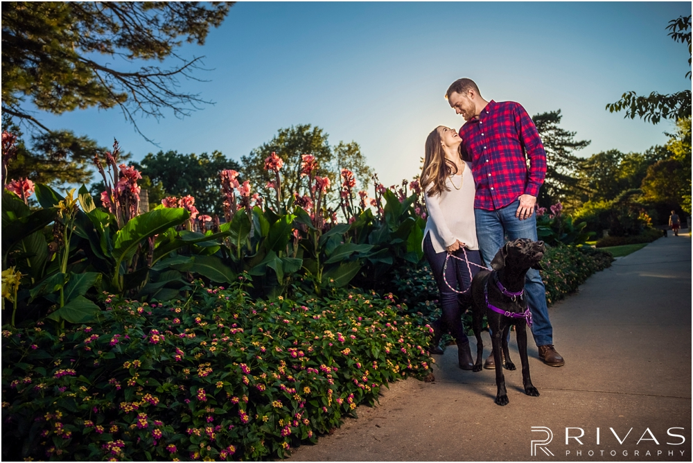 Loose Park Fall Engagement Session Sneak Peek | A candid photo of an engaged couple holding hands and walking their dog at Loose Park in Kansas City.