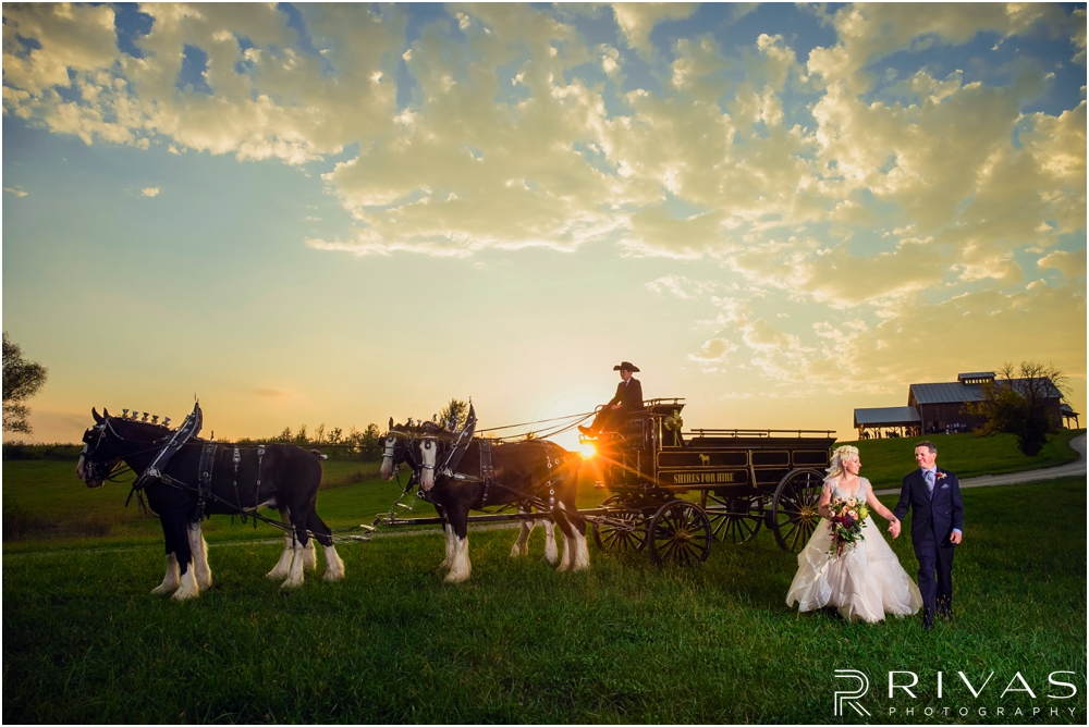 Timber Barn Fall Wedding Sneak Peek | A dramatic portrait of a bride and groom holding hands walking across a field in front of a carriage drawn by four Clydesdales down the hill from the Timber Barn at Weston Red Barn Farm.
