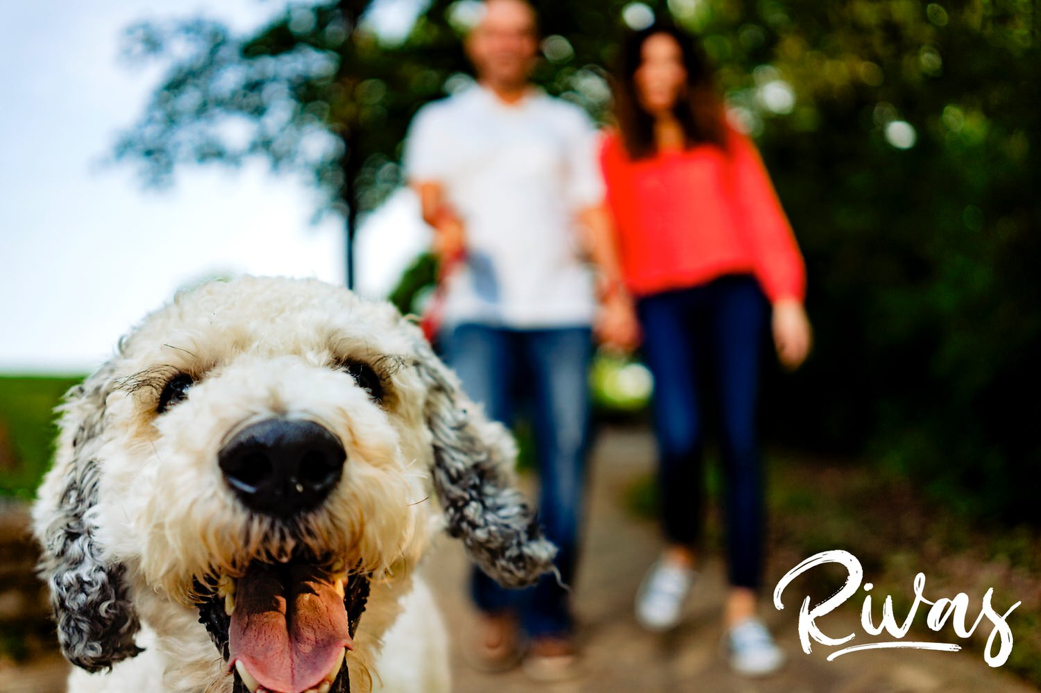 A fun, candid picture of a white poodle in the foreground in focus with his owners at the end of his leash just out of focus. a