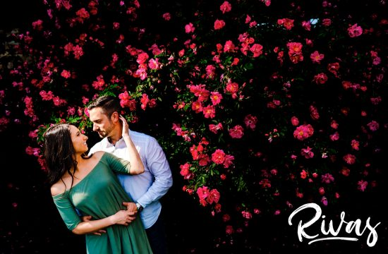 A vibrant picture of an engaged couple sharing an embrace and looking into each others arms as they stand in front of a giant hot pink rose bush in full bloom during their summer engagement session at Loose Park in KC.