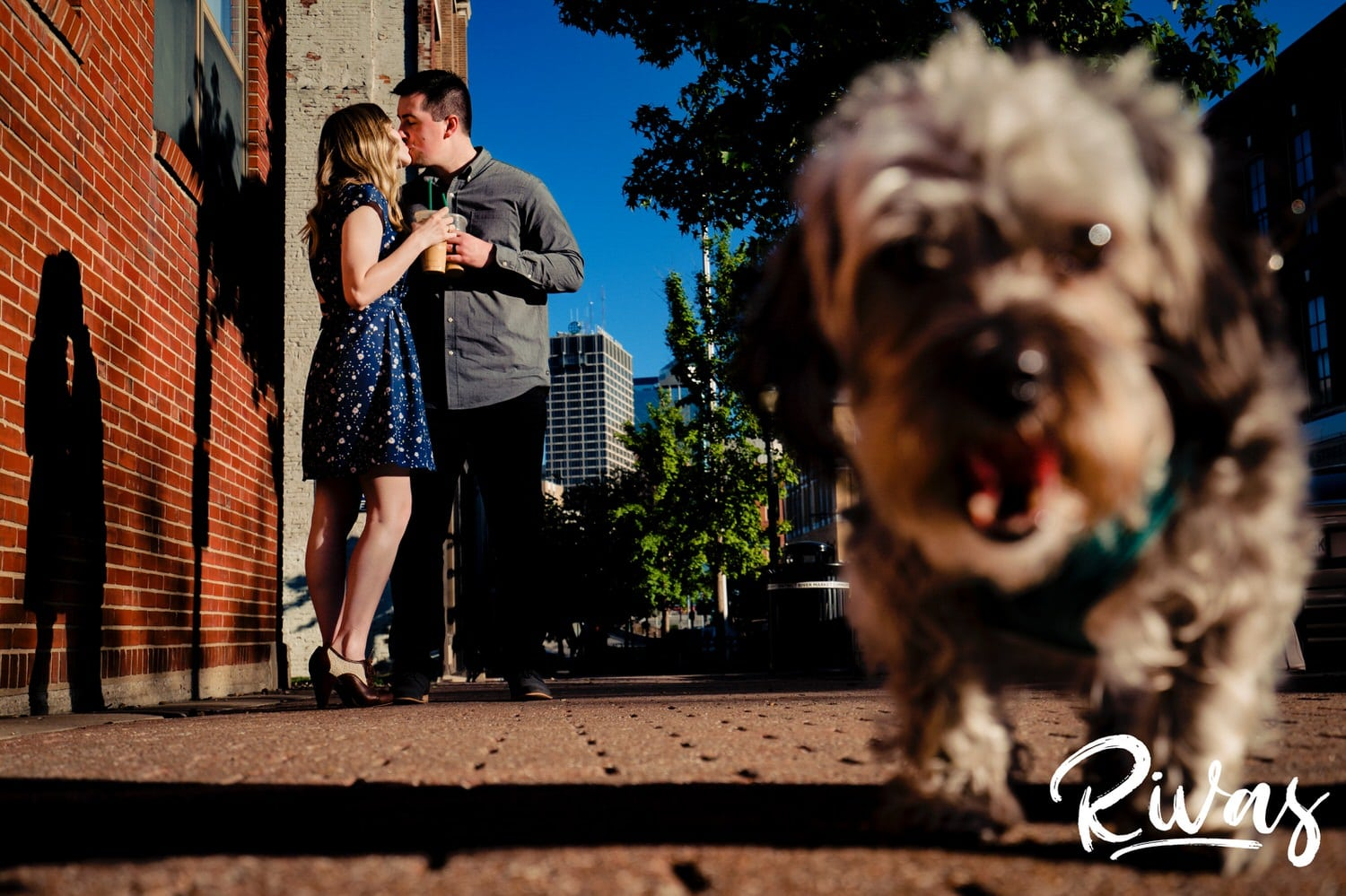 A colorful picture of an engaged couple standing in the background of the image, holding two ups of coffee and sharing a kiss as their gray puppy runs towards the camera, slightly out of focus during their spring engagement session in Kansas City's City Market.