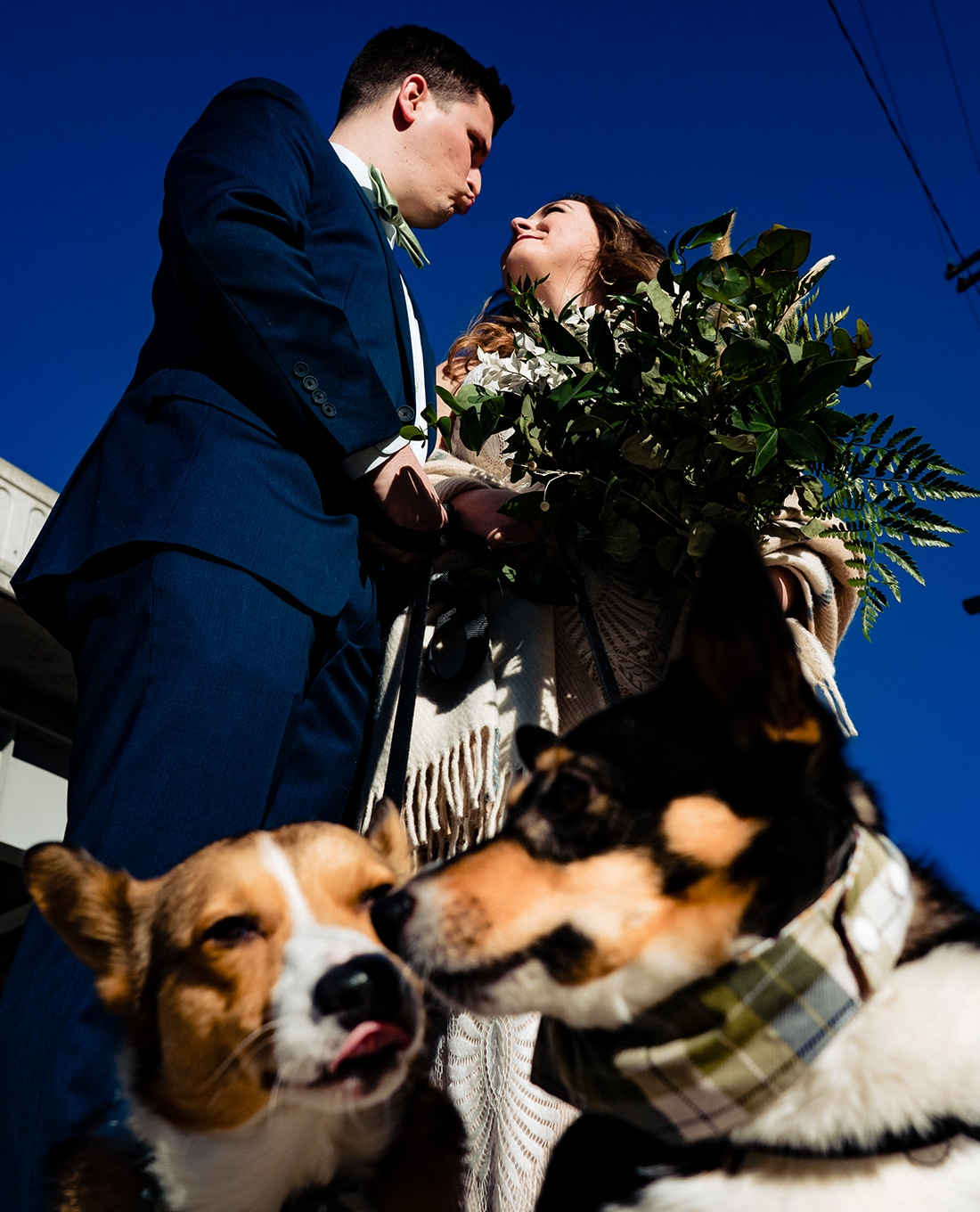 A colorful, candid picture of a groom leaning in to kiss his bride as their dogs lean in to lick each other on the day of their fall wedding in Kansas City.